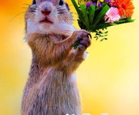 สวัสดีวันจันทร์ ฉันมีดอกไม้ให้เธอ